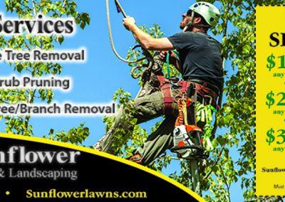 SunflowerLawnTree-THIRD-MS.5.19