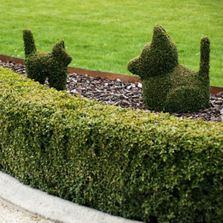 We have the right landscaping company for you.